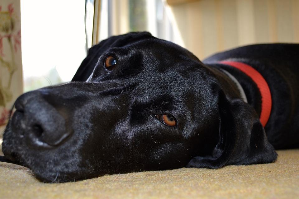 duża wytrzymała mata dla dużego psa