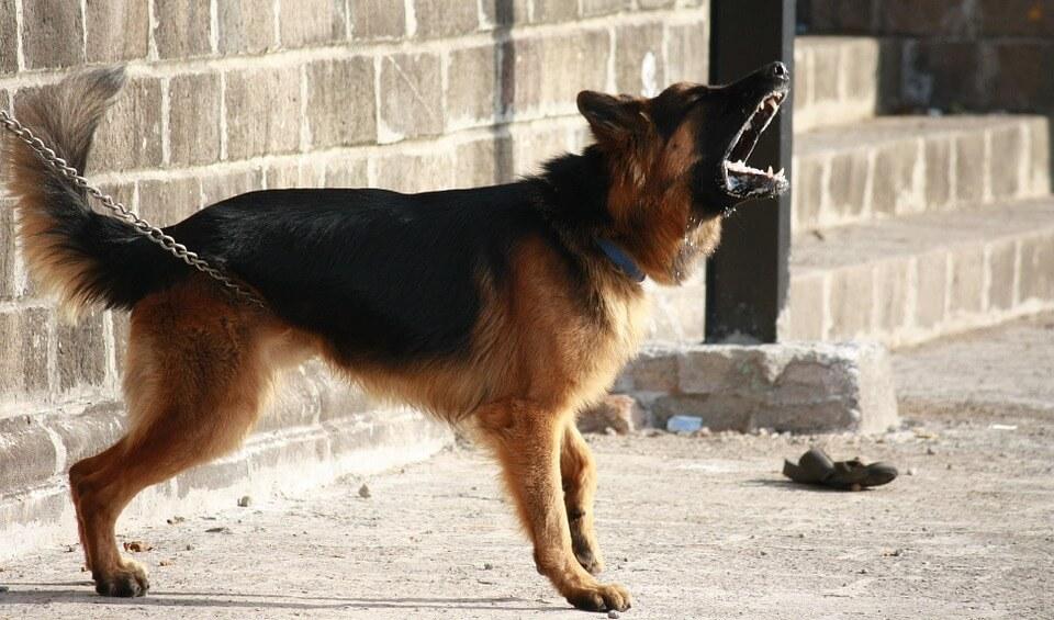odstraszanie psów jest skuteczne