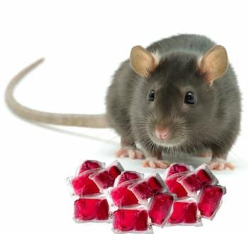 trutka na szczury Garden Lab